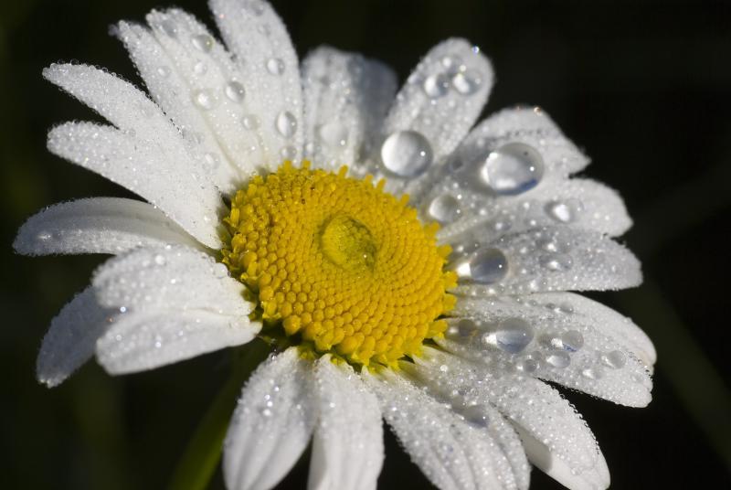 Droppen som fick blomman att rinna över